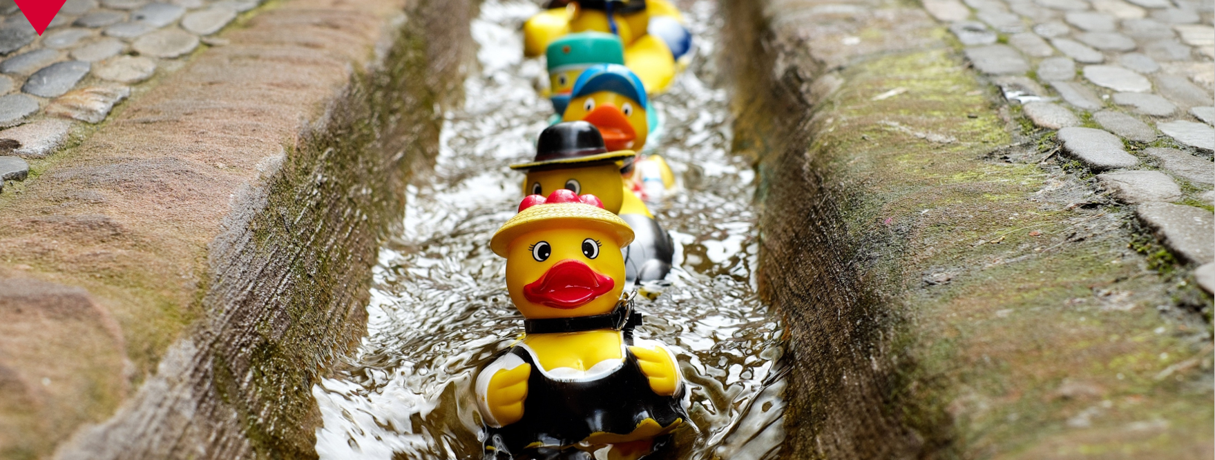Get Your Event Ducks in a Row | Focus Rooms | Blog